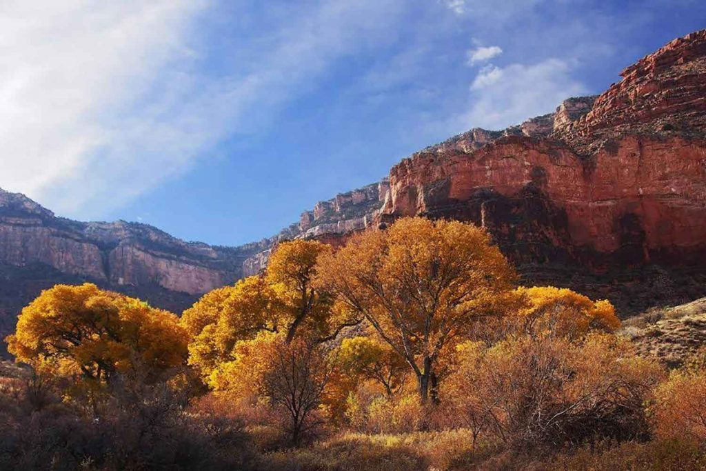 Grand Canyon Fall Colors | DETOURS American West