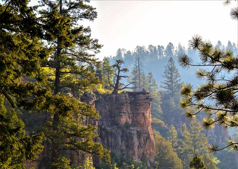 Grand Canyon North Rim - Forest Scenery   DETOURS